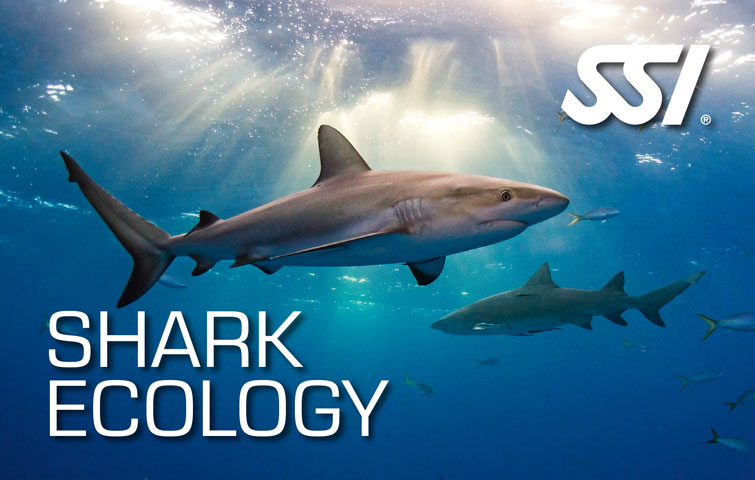 SSI Specialty Shark Ecology